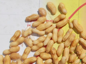 Cover photo for Peanut Maturity Change From Sep 5 to Oct 5