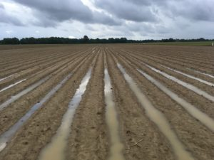 Cover photo for Crop Report Peanut Notes No. 44 2018