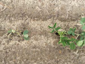 Peanut cycle 2 image