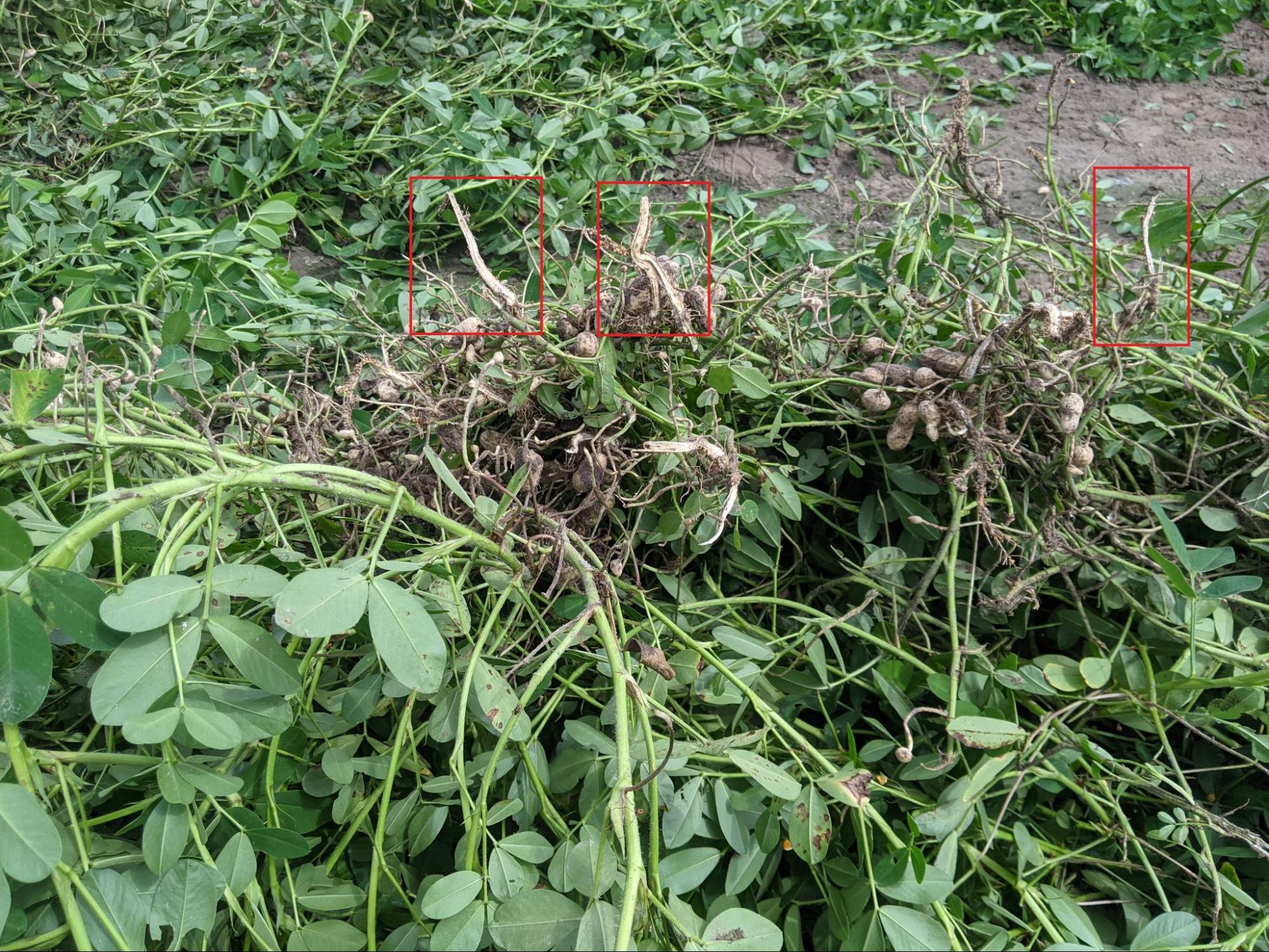 Long peanut roots, DSI blade depth too deep