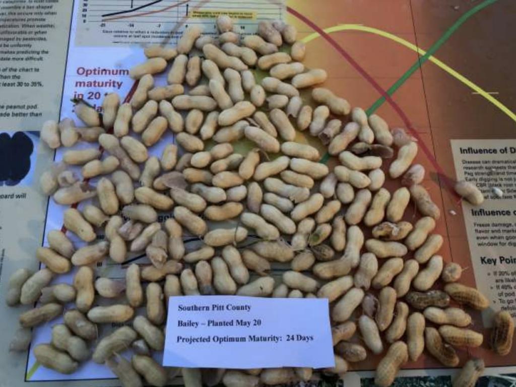 Bailey Peanuts
